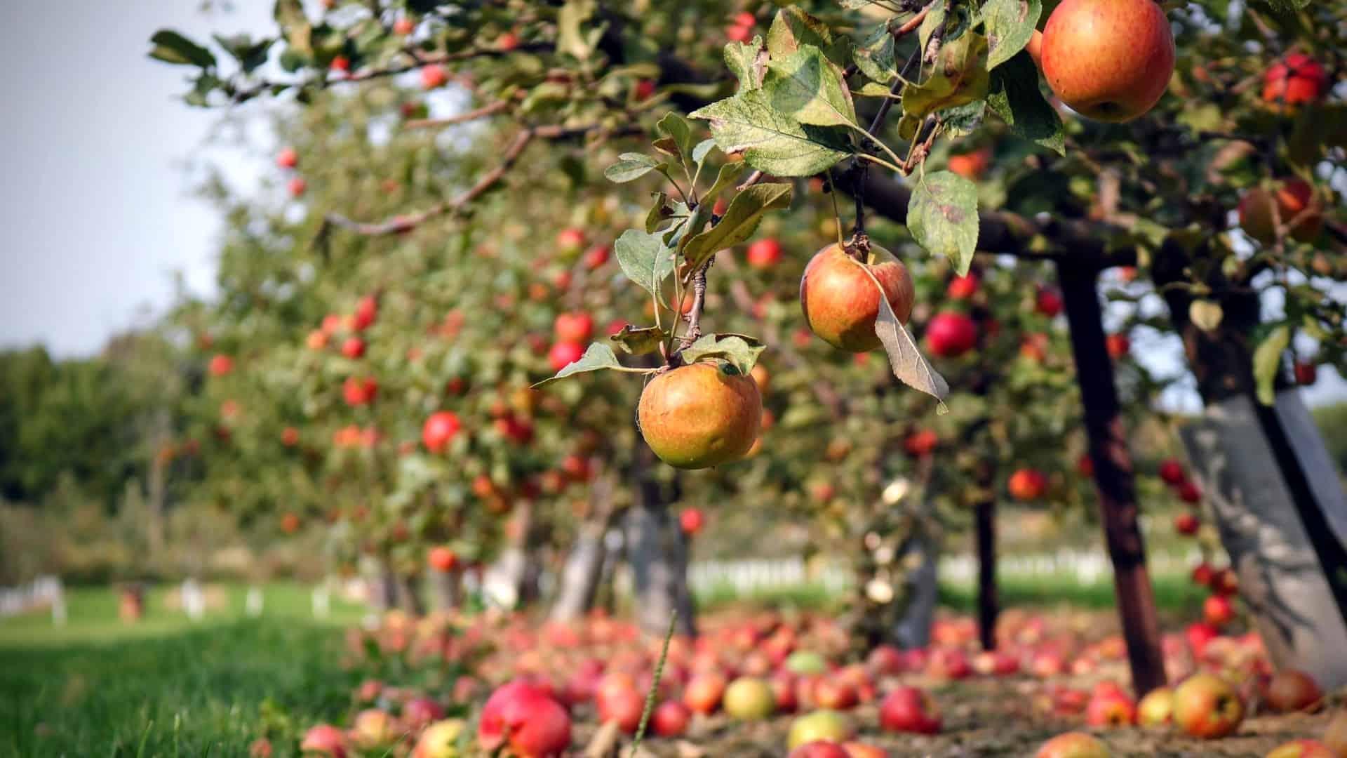 Transformation Under The Apple Tree