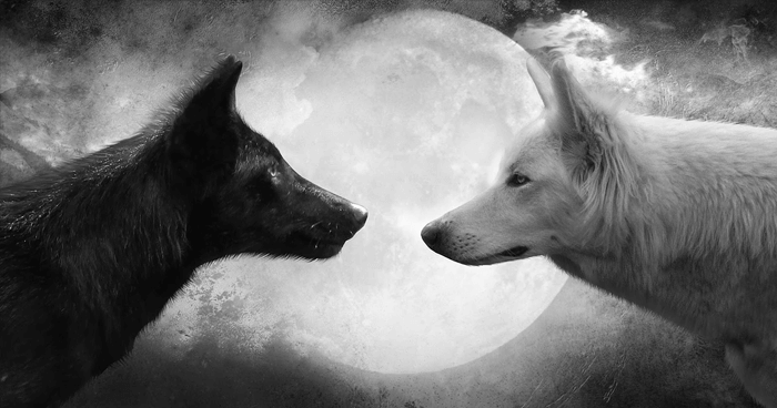 The right wolf