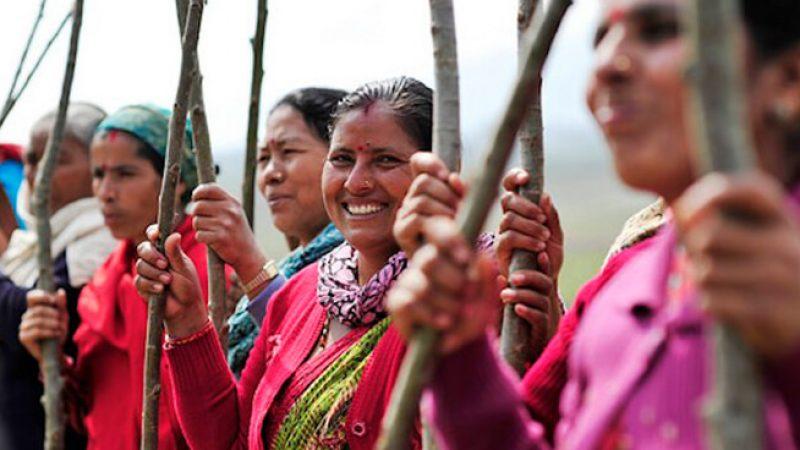 india 50 million trees feature